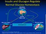 insulin and glucagon regulate normal glucose homeostasis