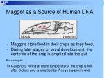 maggot as a source of human dna