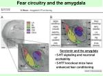 fear circuitry and the amygdala