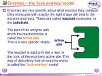 enzymes the lock and key model