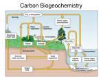 carbon biogeochemistry