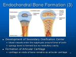 endochondral bone formation 3