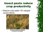 insect pests reduce crop productivity
