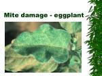 mite damage eggplant