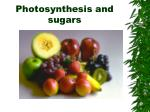 photosynthesis and sugars