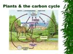 plants the carbon cycle