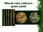 wheat rust reduces grain yield