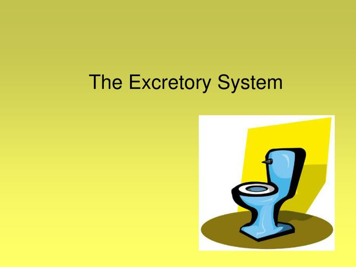 the excretory system n.
