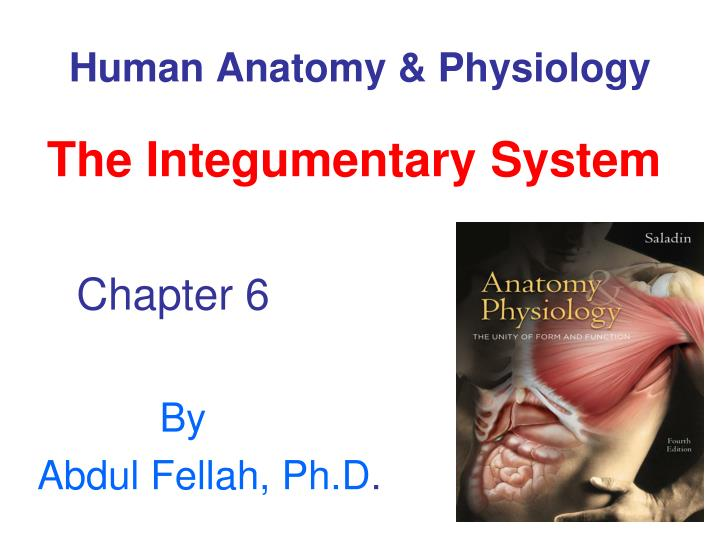 PPT - Human Anatomy & Physiology PowerPoint Presentation - ID:792153