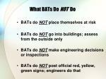 what bats do not do