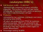 leukocytes wbc s