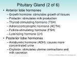 pituitary gland 2 of 6
