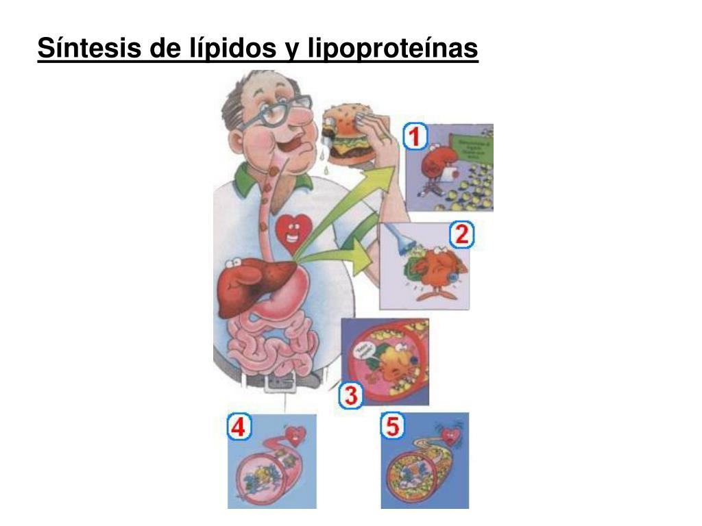 10 cosas sobre alimentos que aceleran el metabolismo para quemar grasa
