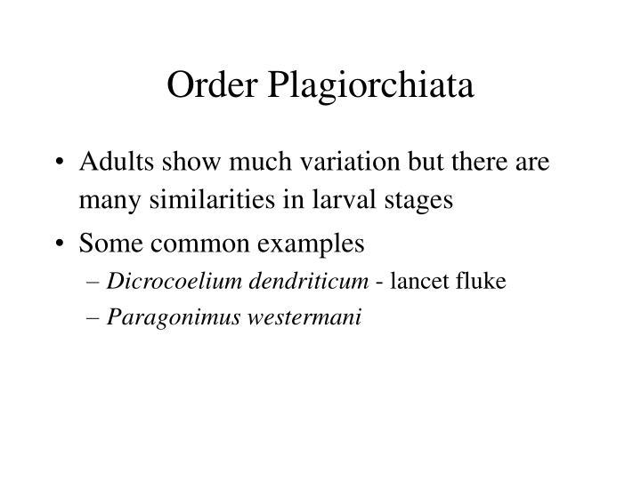 Order Plagiorchiata