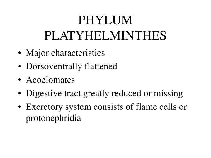 phylum platyhelminthes n.