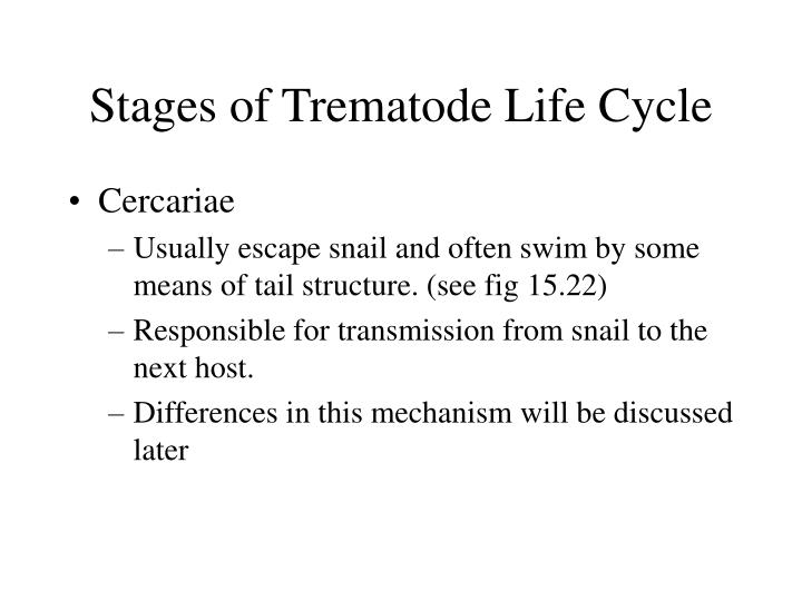 Stages of Trematode Life Cycle