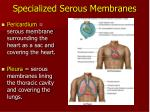 specialized serous membranes