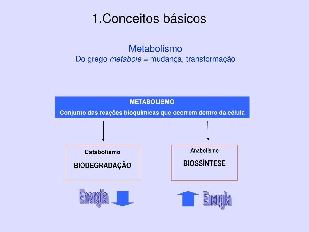 Los Síntomas De Ƭener Un Metabolismo Acelerado