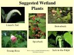 suggested wetland plants
