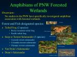 amphibians of pnw forested wetlands