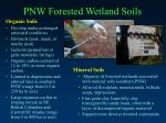 pnw forested wetland soils