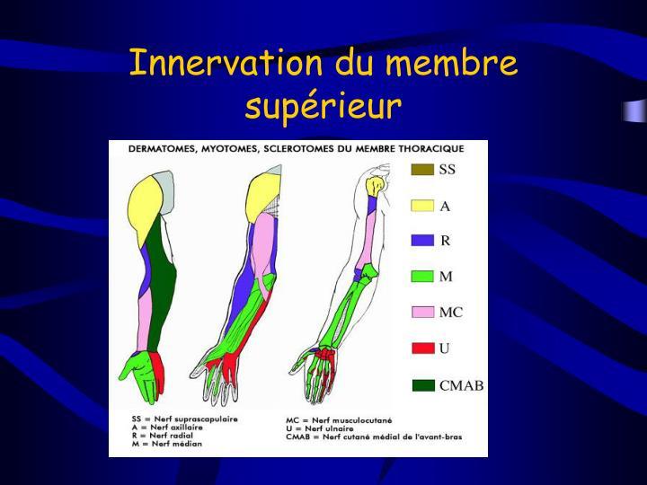 Innervation du membre supérieur