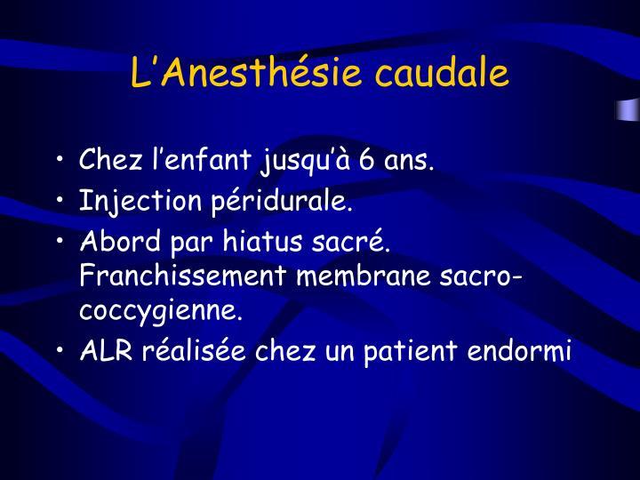 L'Anesthésie caudale