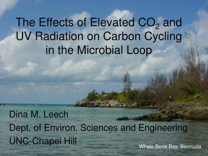 the effects of elevated co 2 and uv radiation on carbon cycling in the microbial loop n.