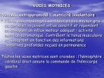 voies motrices1