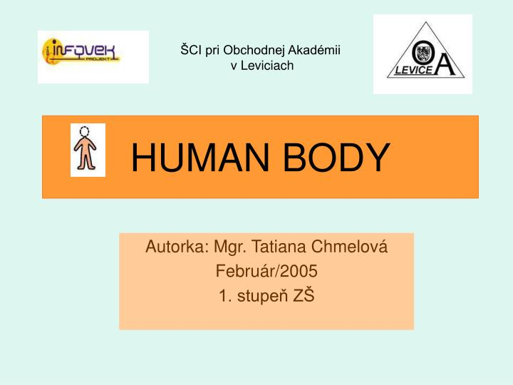 human body n.