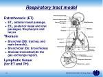 respiratory tract model