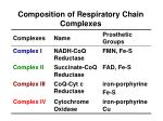 composition of respiratory chain complexes