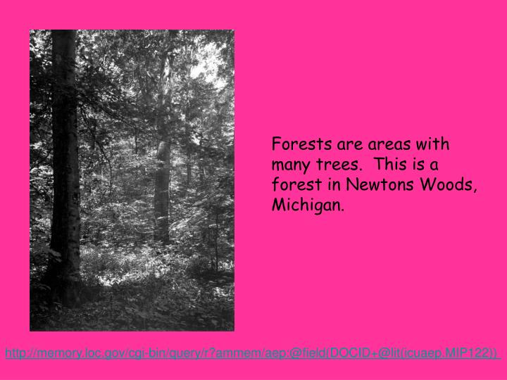 Forests are areas with many trees.  This is a forest in Newtons Woods, Michigan.