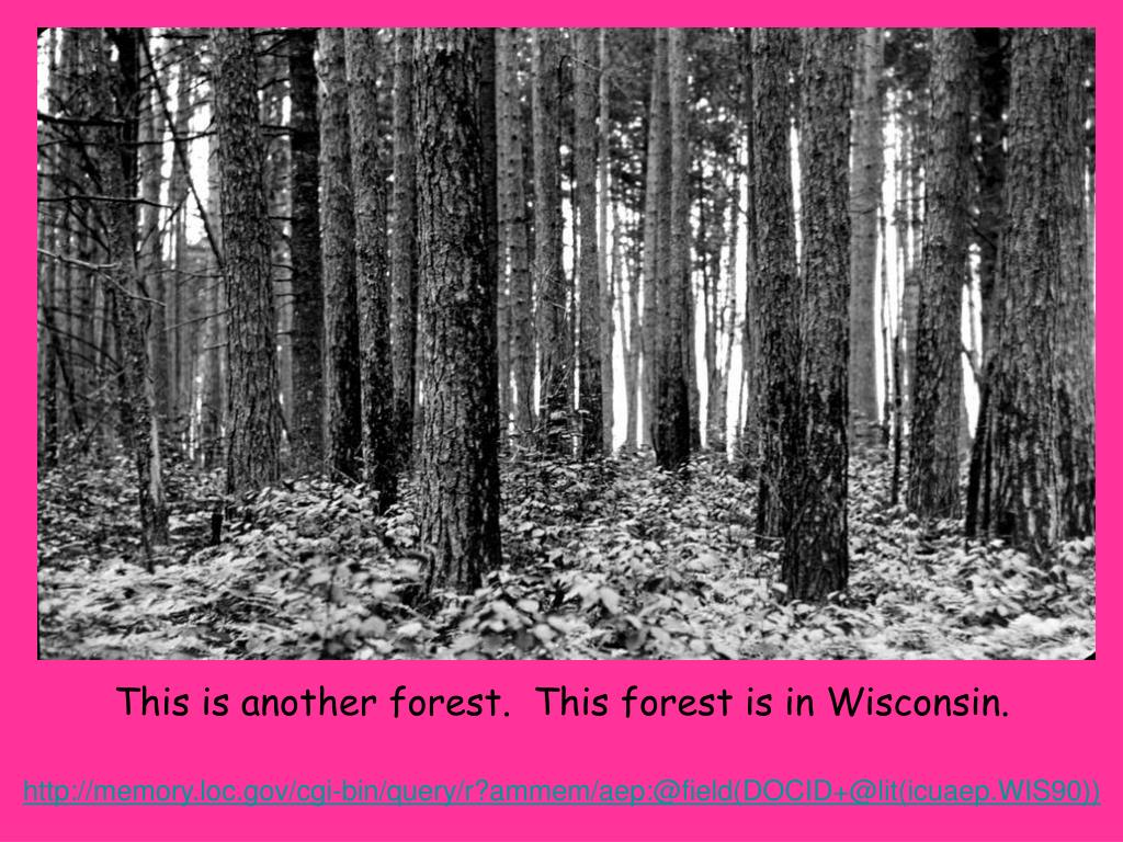 This is another forest.  This forest is in Wisconsin.
