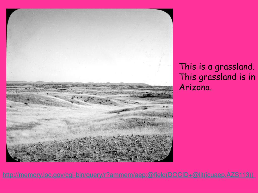 This is a grassland.  This grassland is in Arizona.