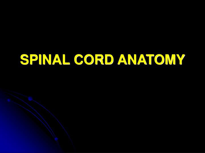 spinal cord anatomy n.