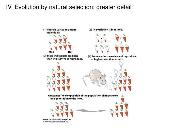 IV. Evolution by natural selection: greater detail