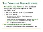 t wo pathways of terpene synthesis