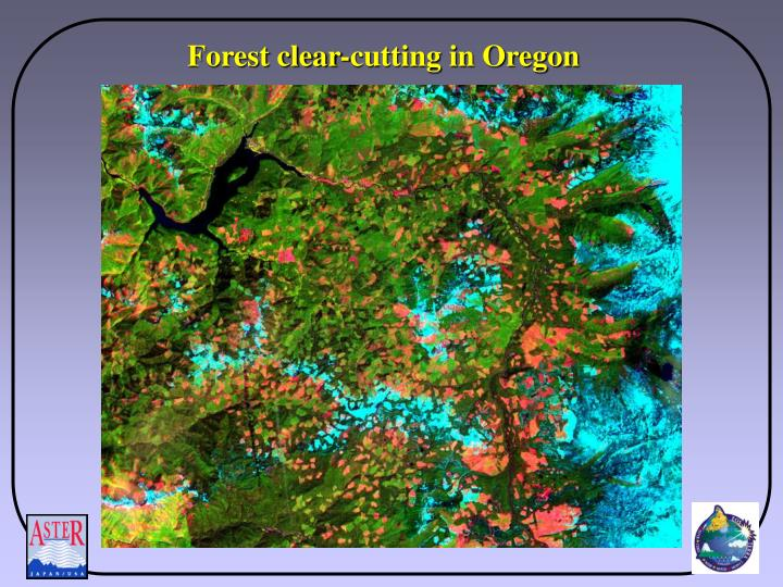 Forest clear-cutting in Oregon