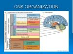 cns organization