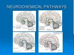 neurochemical pathways