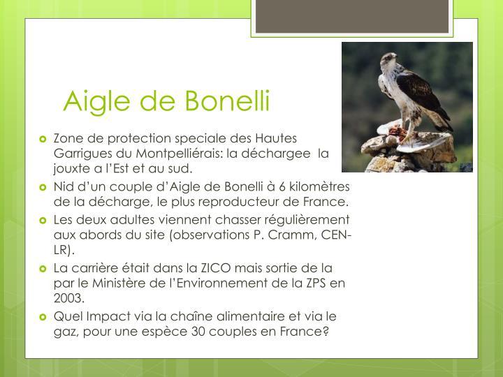 Aigle de Bonelli
