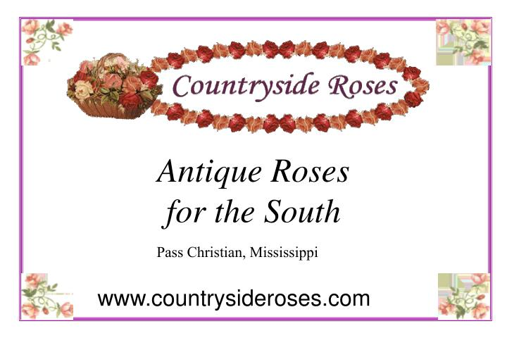 antique roses for the south n.