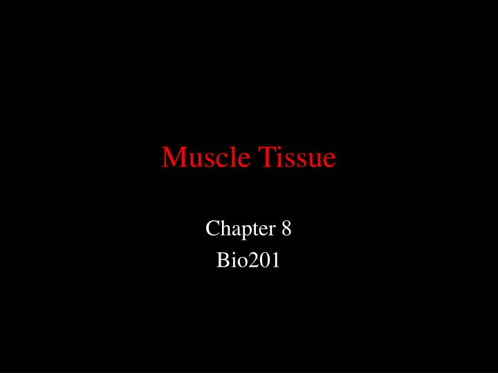 muscle tissue n.