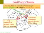 visual control of grasping