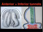 anterior inferior tunnels
