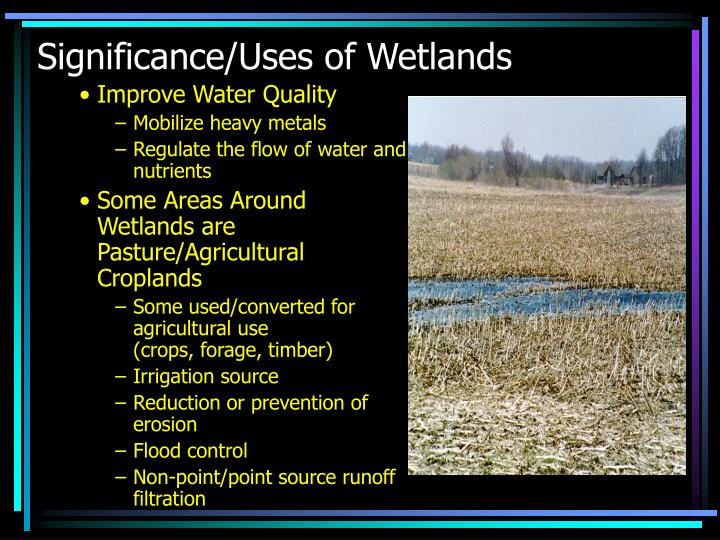 Significance uses of wetlands1