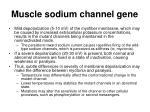 muscle sodium channel gene