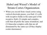 hubel and wiesel s model of striate cortex organization