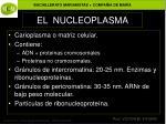 el nucleoplasma